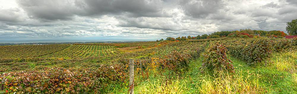 Vineyard Vista by Brian Fisher