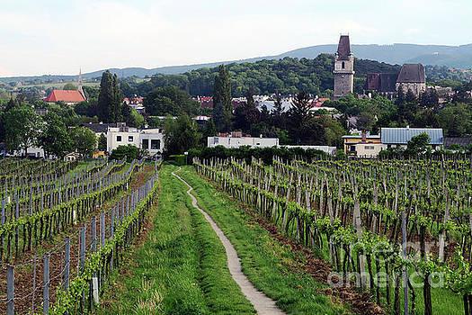 Vineyard Walkway - Austria by Christian Slanec