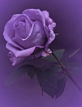 Vintage 2017 Purple Rose by Richard Cummings