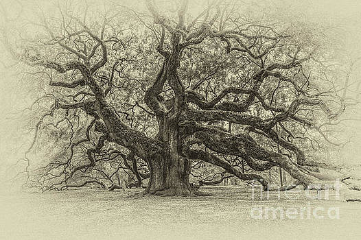 Dale Powell - Vintage Angel Oak Tree
