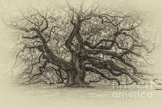 Dale Powell - Vintage Angel Oak Tree