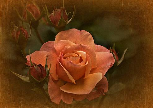 Vintage Aug Rose by Richard Cummings
