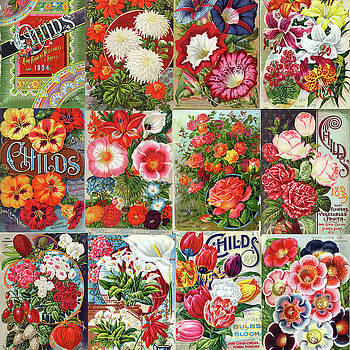 Peggy Collins - Vintage Childs Nursery Flower Seed Packets Mosaic