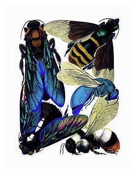 Tina Lavoie - Vintage entomology, bees, hornets, wasps nature illustration