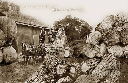 California Views Mr Pat Hathaway Archives - Vintage Exaggeration photo W. H. Martin Giant Cabbage, Corn, pump