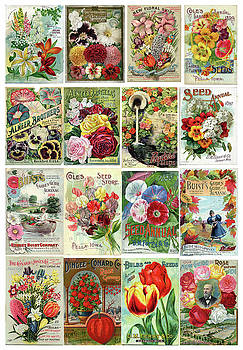 Peggy Collins - Vintage Flower Seed Packets 1