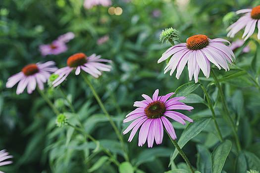 Lorrie Joaus - Vintage flowers