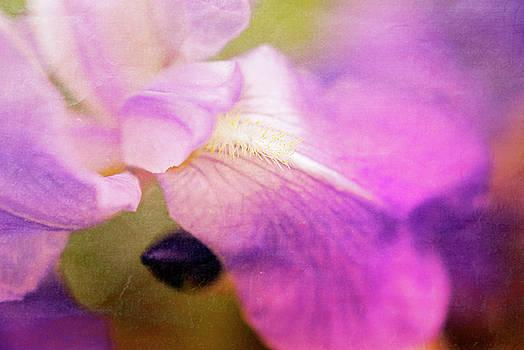 Vintage Iris by AugenWerk Susann Serfezi