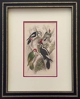 Vintage Italian Bird Print Circa 1850 by Unknown