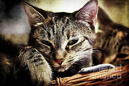 Vintage Kitties by Pamela Moran