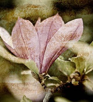 Frank Tschakert - Vintage Magnolia