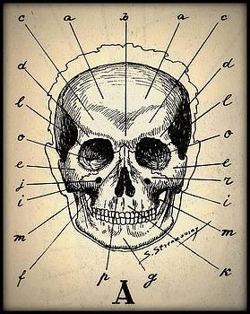 Peter Gumaer Ogden - Vintage Medical Human Skull Anatomy Chart