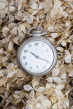Edward Fielding - Vintage pocket watch over dried flowers