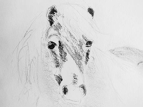 Vintage Pony by Sandra Silva