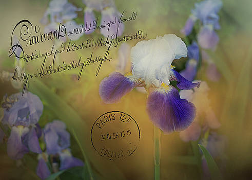 Vintage Purple Irises by TnBackroadsPhotos
