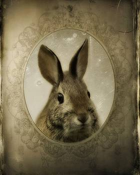 Gothicrow Images - Vintage Rabbit Portrait