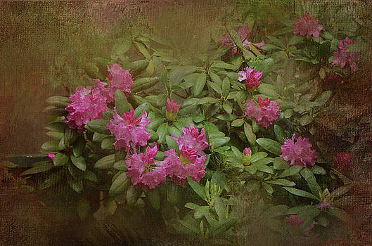 Vintage Rhododendron by Carla Parris