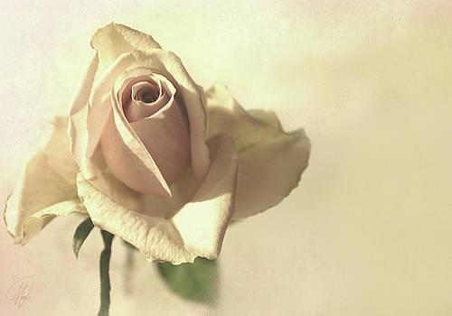 Vintage Rose by Margaret Hormann Bfa
