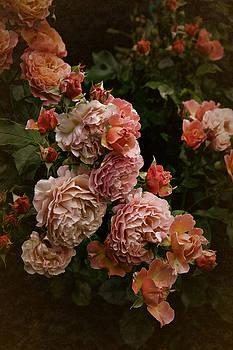Vintage Roses, 6.17 by Richard Cummings