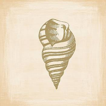 Vintage Sea Shell Illustration by Masterpieces Of Art