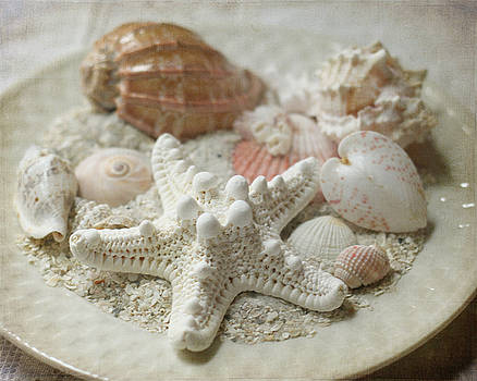Vintage Shells by Sherry Hahn
