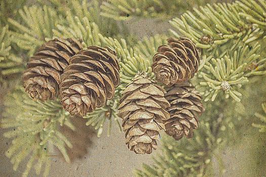 Ray Van Gundy - Vintage Spring Pine Cones