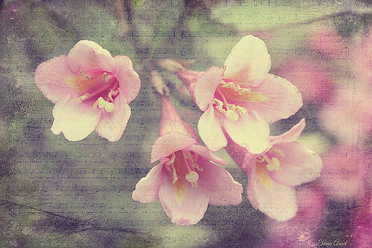 Vintage Spring Weigela by Trina Ansel