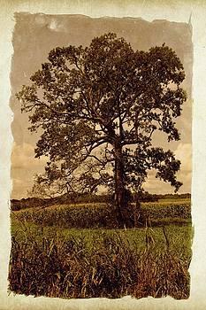 Vintage Tree by John Benedict