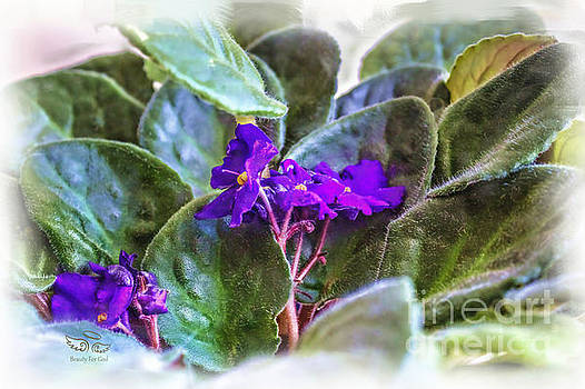Violet by Beauty For God