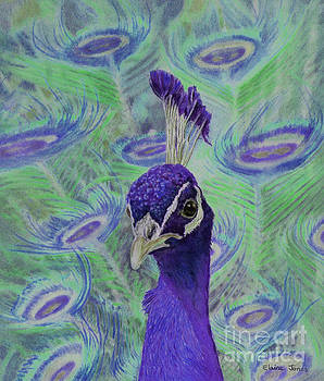 Violet Peacock by Elaine Jones