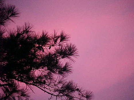 Violet Pine by Ricky  Rayburn