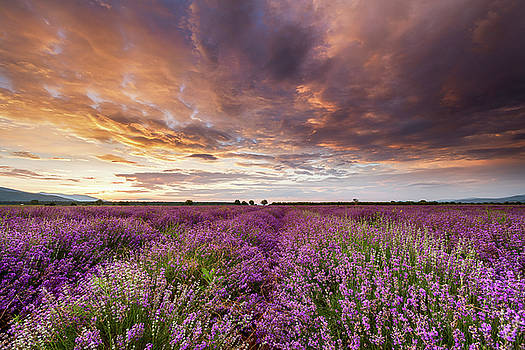 Violet Sunrise by Evgeni Dinev