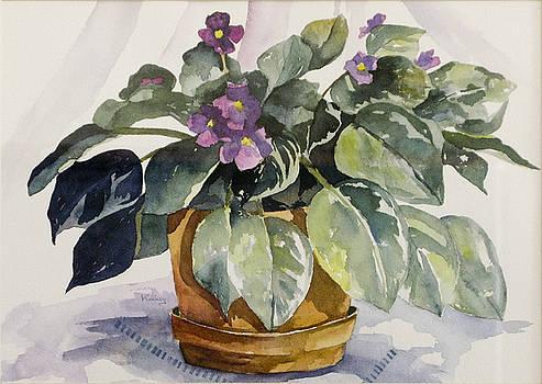 Violets by Jerry Kelley