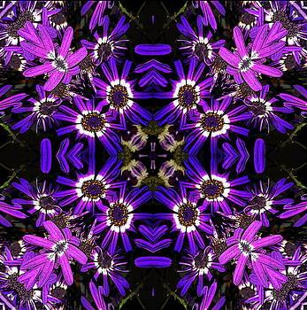 Violets by Jesus Nicolas Castanon