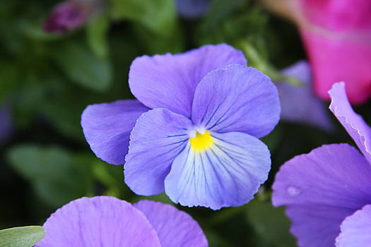 Violets by Thirty Three Photography