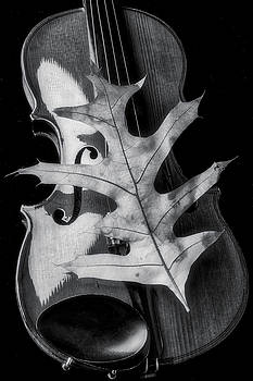 Violin And Autumn Leaf In Black And White by Garry Gay