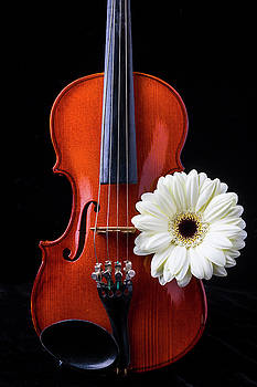 Violin And White Daisy by Garry Gay