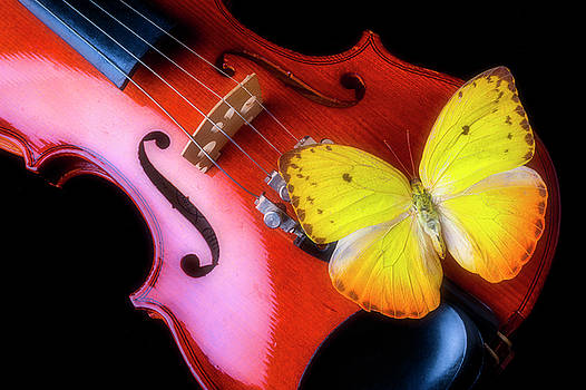 Violin And Yellow Butterfly by Garry Gay