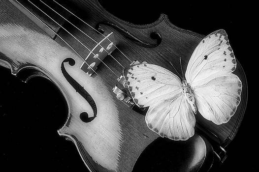 Violin And Yellow Butterfly In Black And White by Garry Gay