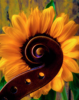 Violin Scroll And Sunflower by Garry Gay