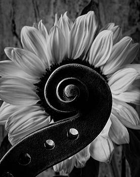 Violin Scroll And Sunflower In Black And White by Garry Gay