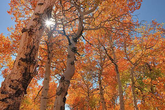 Virginia Canyon Fall Aspens by Dean Hueber