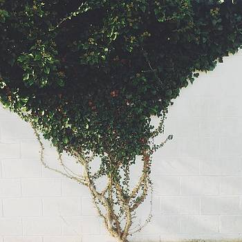 Virginia's Beauty Kills Me 😍 by Kristen Holbrook