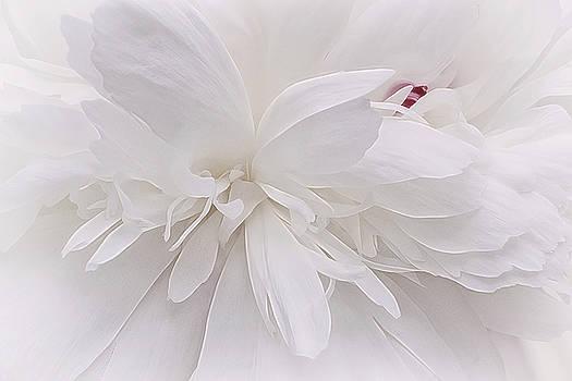 White Ballet Powder Puff by Darlene Kwiatkowski