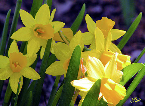 Visions of Daffodils Danced in Their Heads by Christine Belt