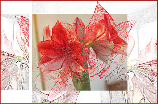 Visions of Red Amaryllis at Christmas by Gretchen Wrede