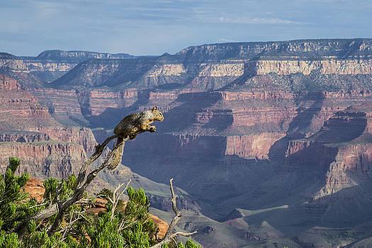 visit to Grand Canyon  by Atul Daimari