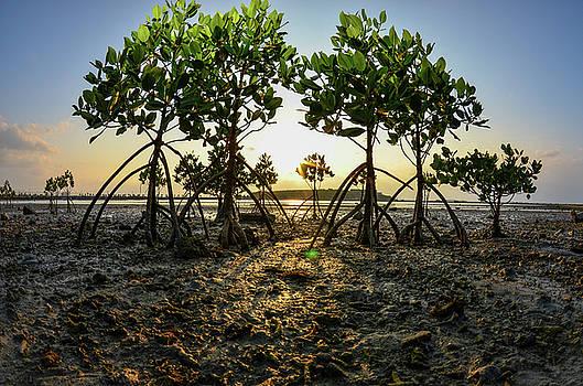Vital ecosystem  by Shawn Miller
