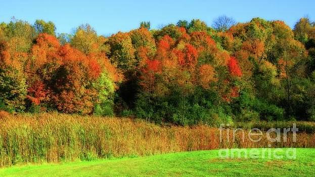 Vivid Autumn by Putterhug Studio