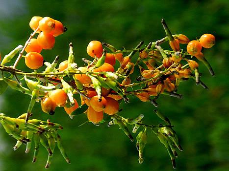 Vivid Berries by Grace Dillon